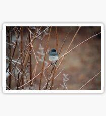 Icy Snowbird Sticker