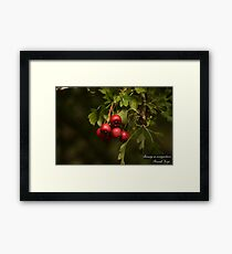 Beauty Is Everywhere!  Framed Print