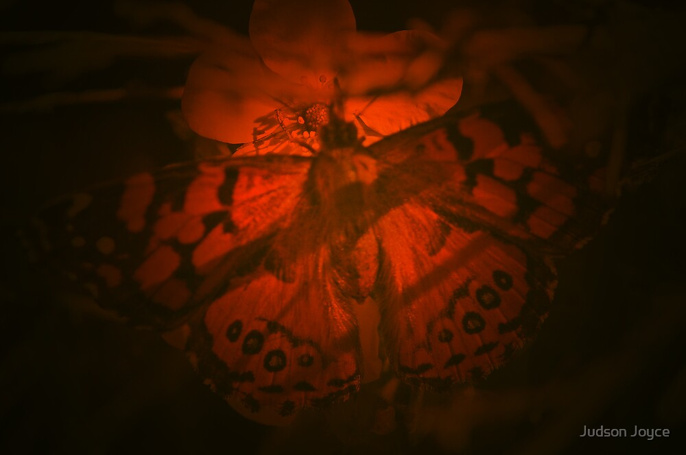 Lighted Butterfly by Judson Joyce