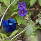 Bluey King by adbetron