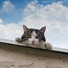 The cats in my world... by Louise LeGresley