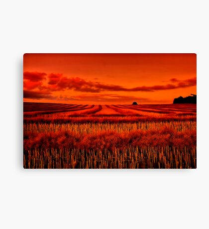 """""""Morning!! - After The Harvest"""" Canvas Print"""