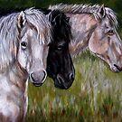 Iceland Ponies  by Susan McKenzie Bergstrom