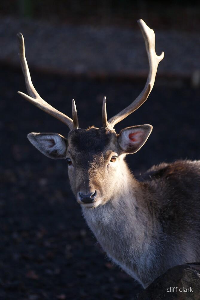 Deer by cliff clark