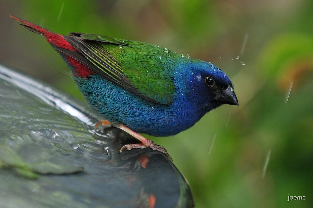 Singing in the rain! by joemc
