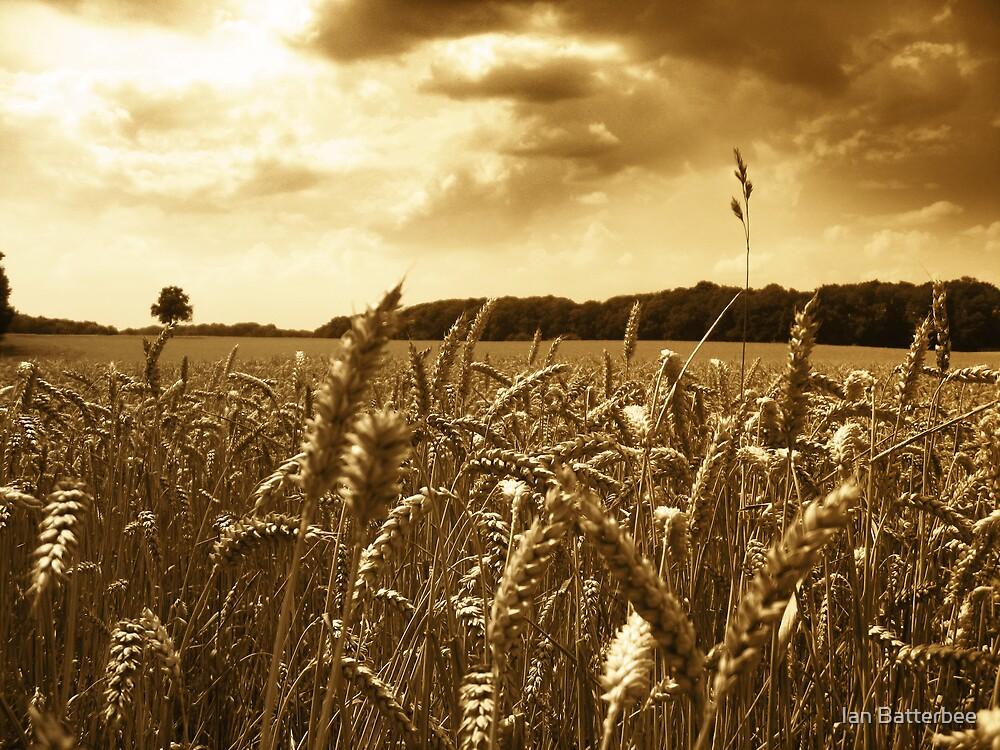 Old Corn Field by Ian Batterbee