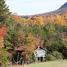 Old Barn with Fall Foliage Surrounding it by Stacey Vincent