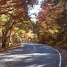Winding Road on a Fall Day by Stacey Vincent