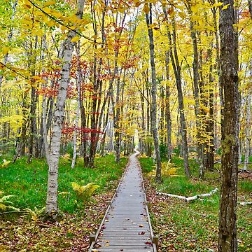 the Boardwalk, Jessup Trail, Acadia NP, ME by mdidrh