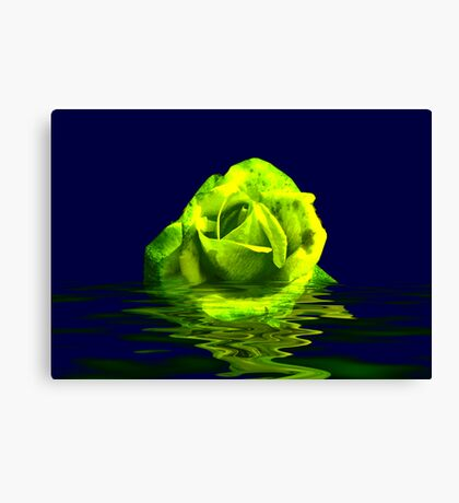 Rose #4 Canvas Print