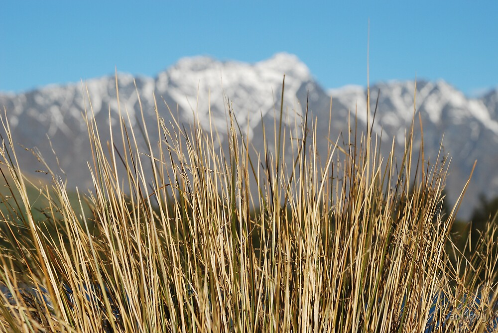 the remarkables behind the grass by paul levy