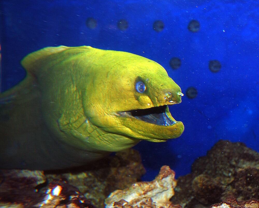 the big fish by deegarra