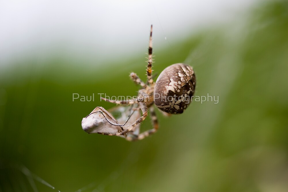 Packed lunch by Paul Thompson Photography