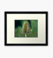 I Couldn't pass this without taking a shot. Framed Print