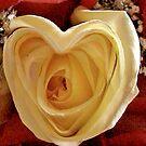Valentine Rose by captphrank