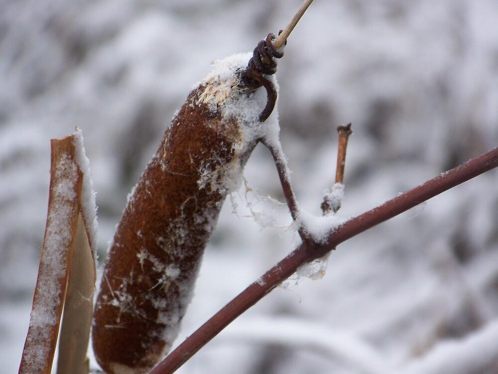 WinterTails 2 by fasbiks4me