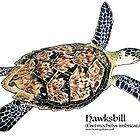 Hawksbill Sea Turtle by Artwork by Joe Richichi
