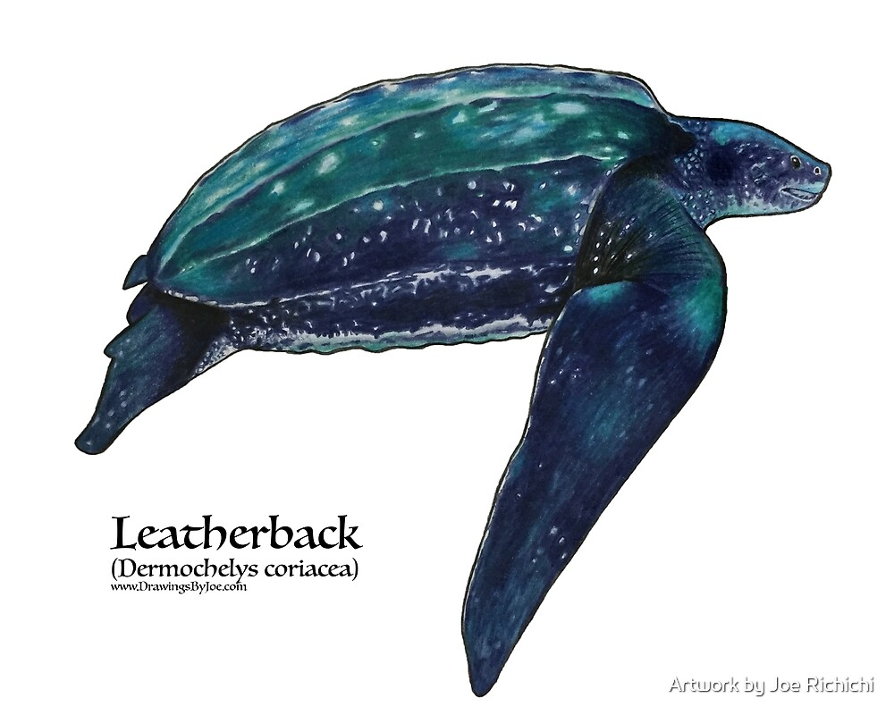 Leatherback Sea Turtle by Artwork by Joe Richichi