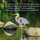 Blue Heron Reflections Isaiah 46:4 by hummingbirds