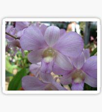 Lovely in Lavender Sticker