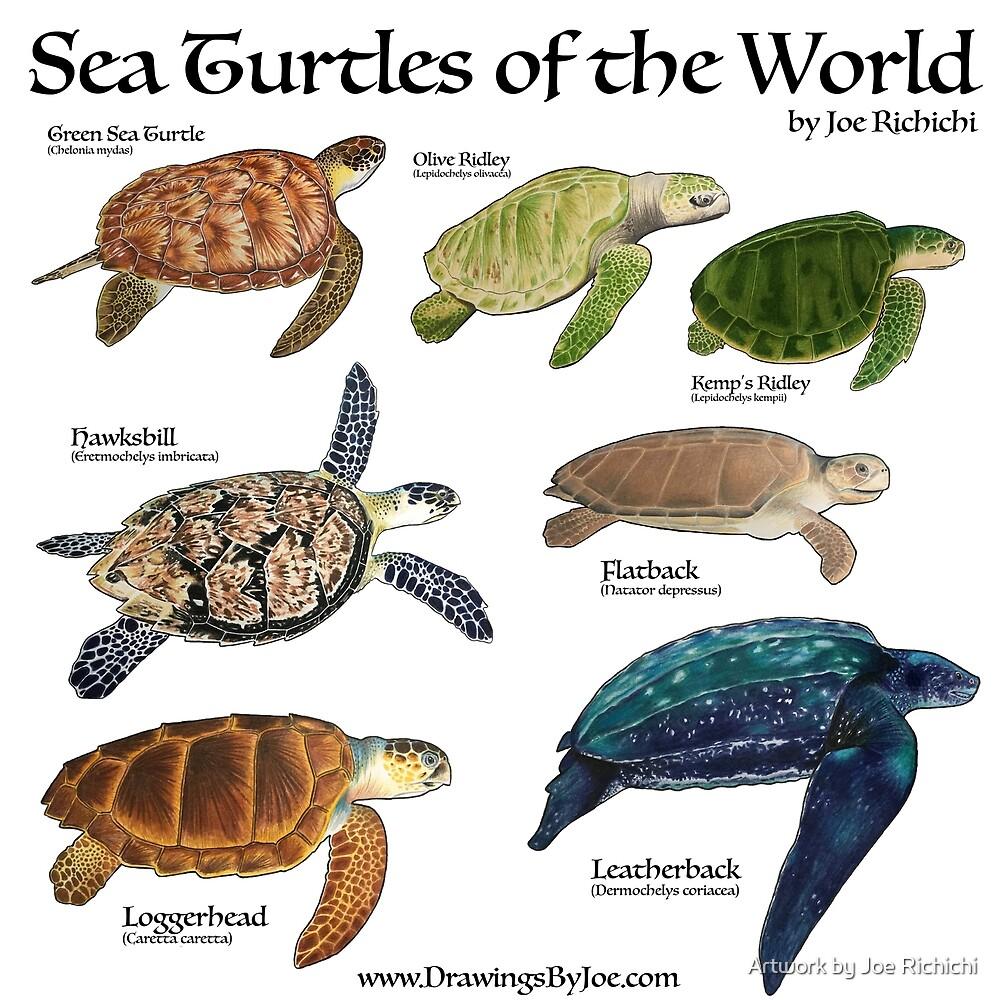 Sea Turtles of the World by Artwork by Joe Richichi
