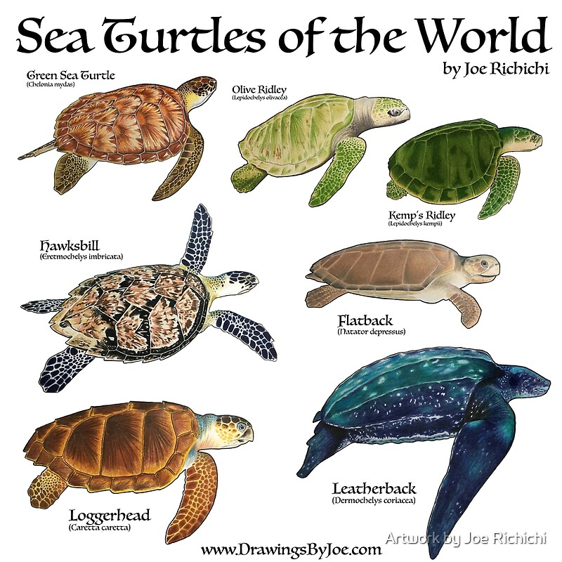 From Sand to Surf: Saving the Sea Turtle
