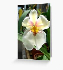 A Very Simple, Stunning Orchid Greeting Card