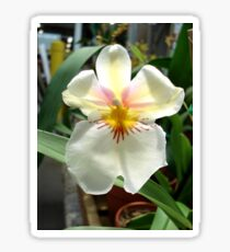 A Very Simple, Stunning Orchid Sticker