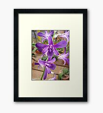 I would call this one, Sparkle Plenty! Framed Print
