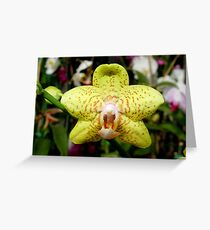 Ever see an orchid snarl? Greeting Card