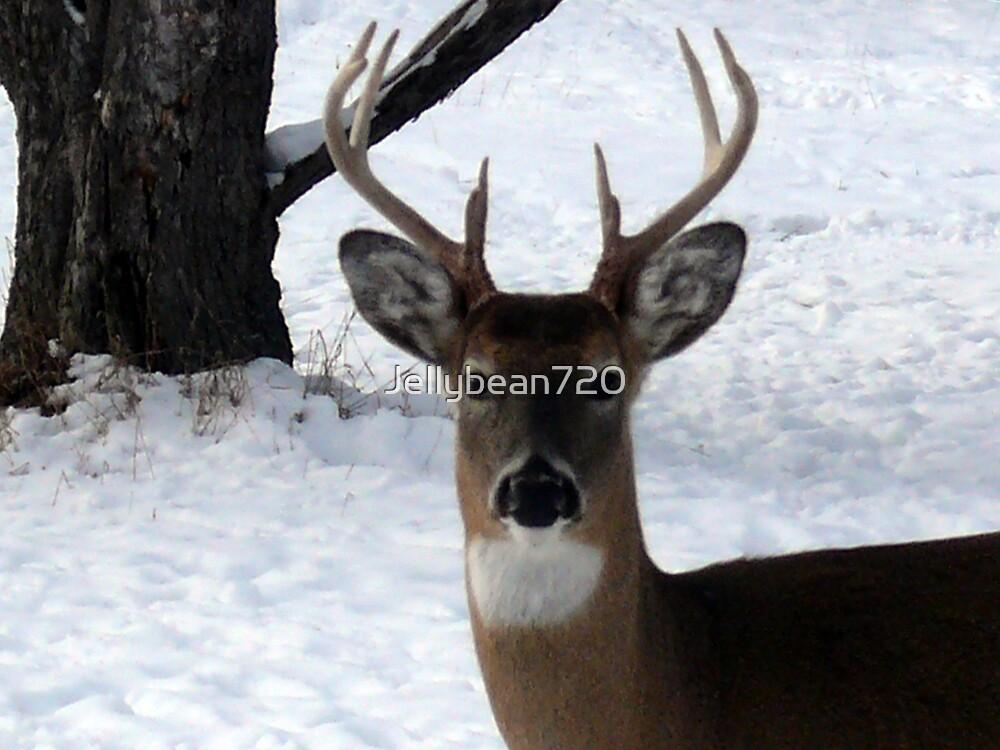 Deer by Jellybean720
