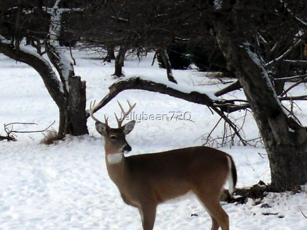 Deer 2 by Jellybean720