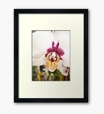 All Orchids have Faces Framed Print