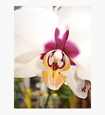 All Orchids have Faces Photographic Print