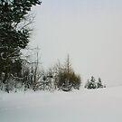 Winter Silence by Barbara  Brown