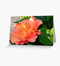 Ruffled Orange Hibiscus Greeting Card