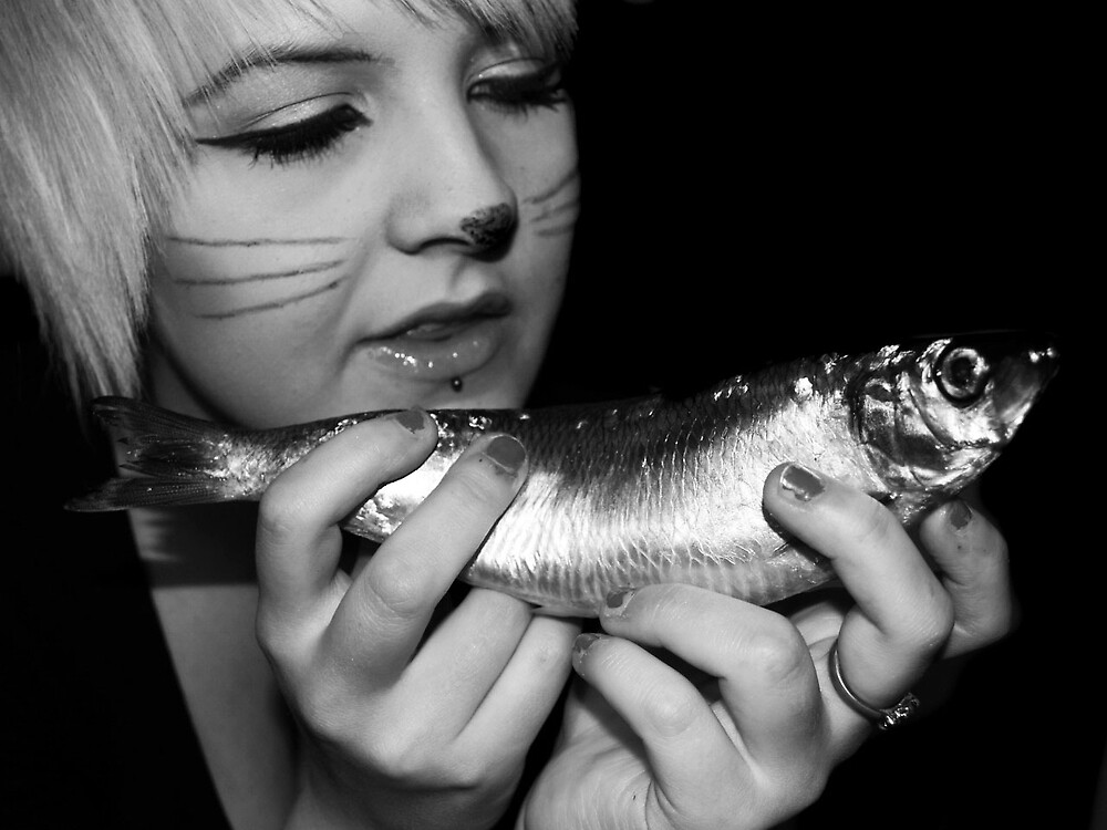 The Cat And The Fish by Sarah Holliday