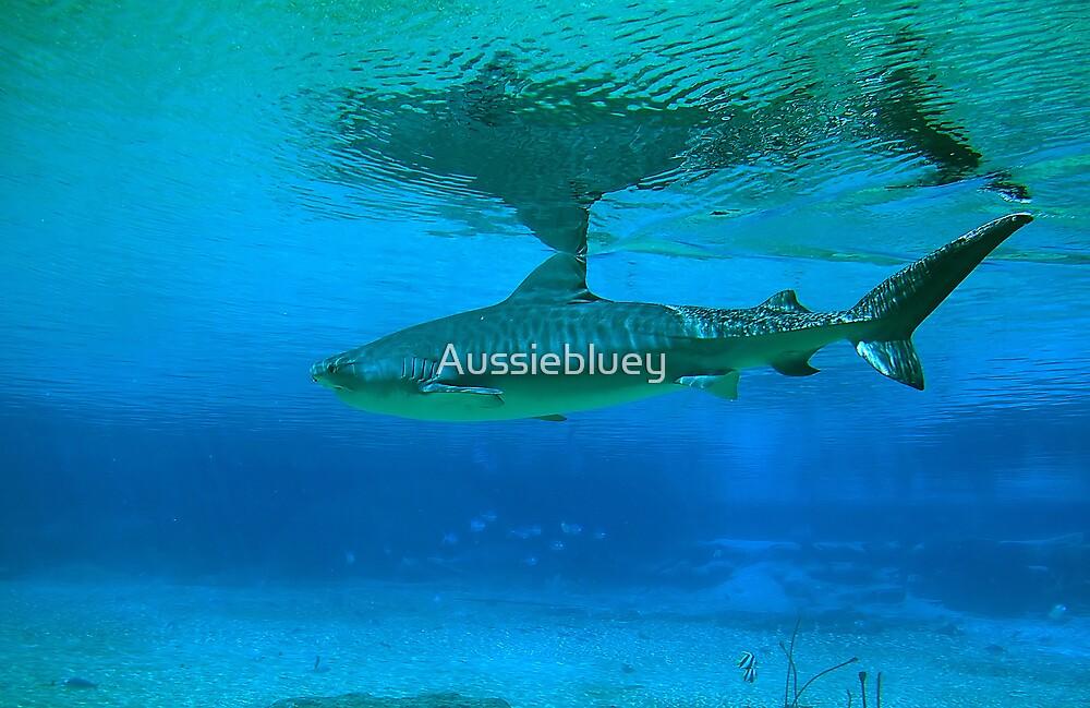 Shark Reflections. by Aussiebluey