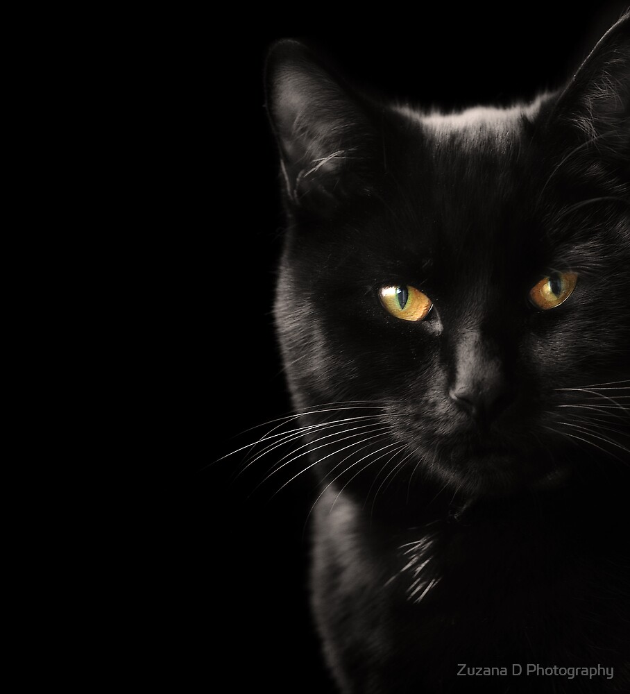 cute hunter by Zuzana D Photography