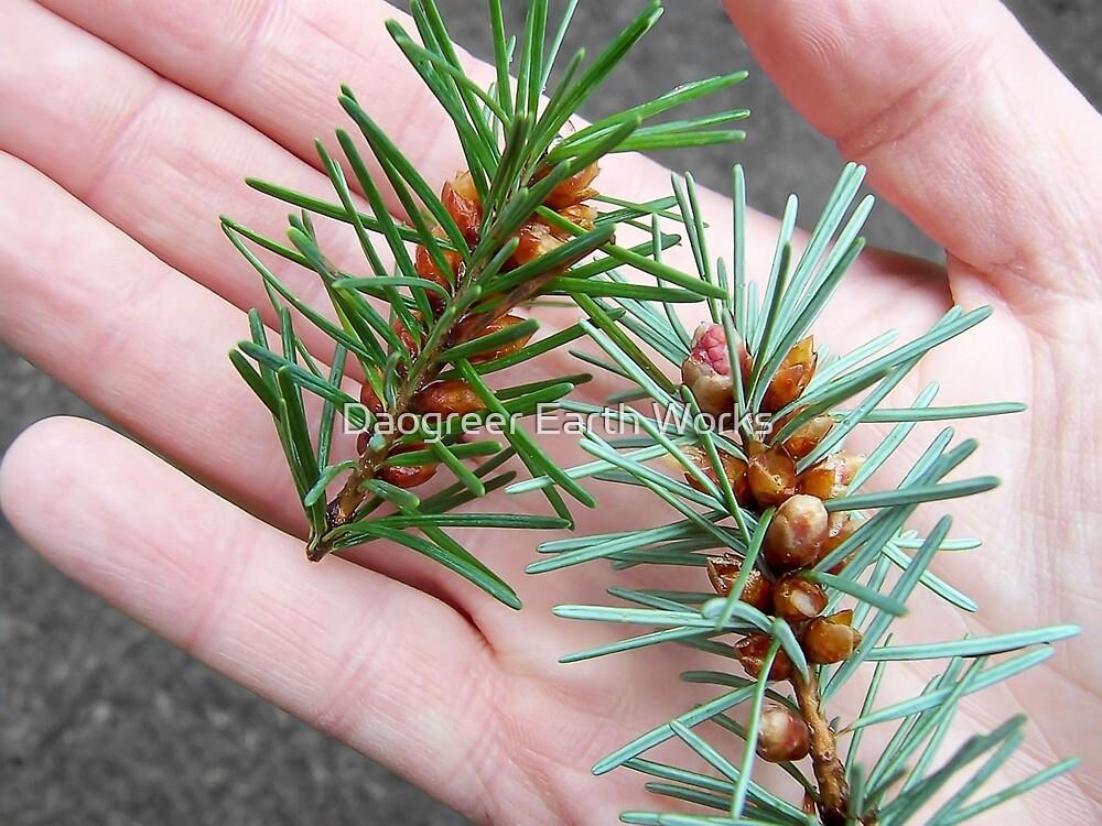 Handsome Conifer by Daogreer Earth Works
