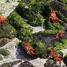 Galapagos' Holiday by Sue  Cullumber