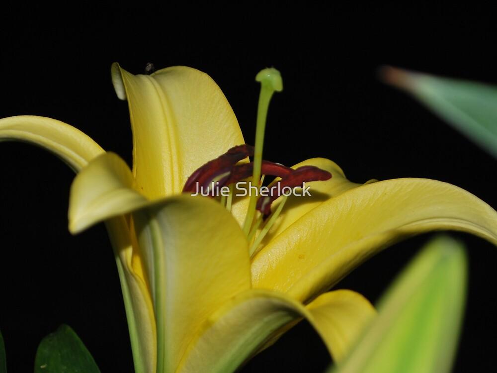 Lillium sp by Julie Sherlock
