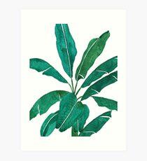 grünes Bananenblatt Aquarell Kunstdruck