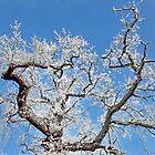 Hoar Frost Tree by AnnDixon
