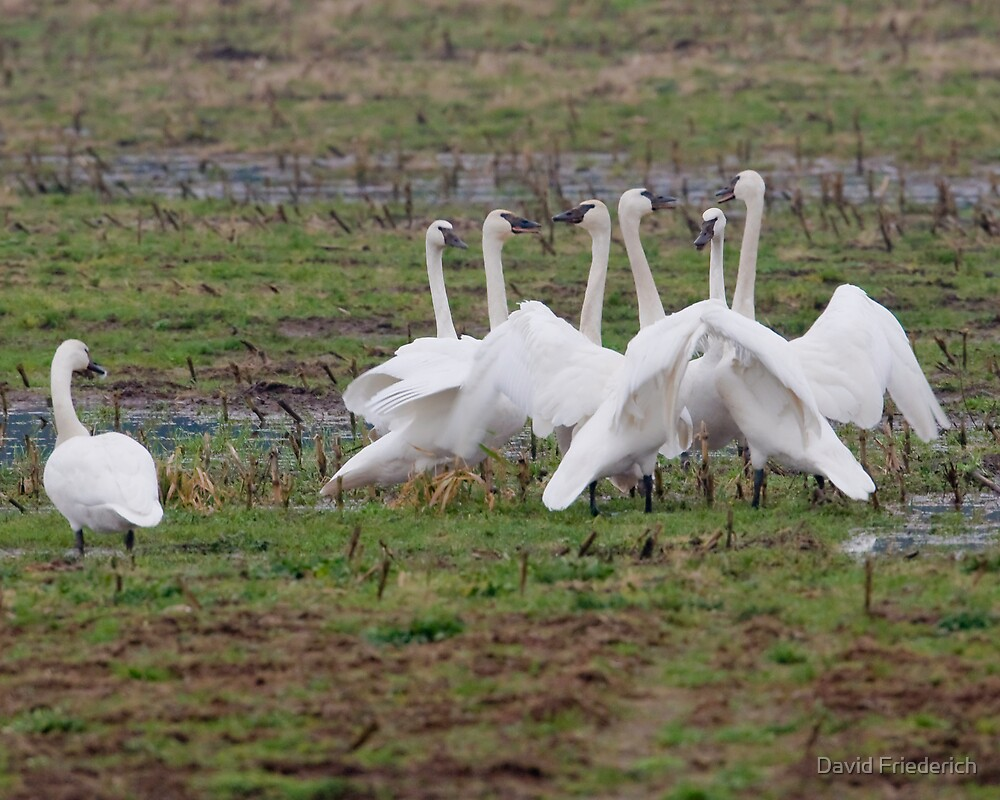 Holding Court by David Friederich