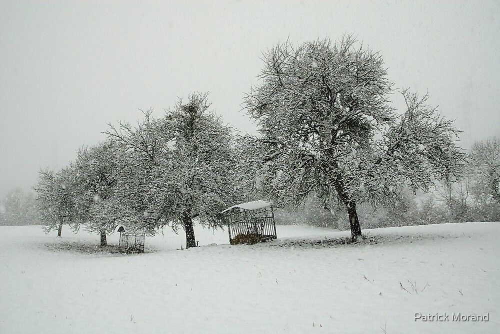 A white morning in the snow by Patrick Morand
