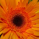 """ Sort of "" SunFlower by MiLa"