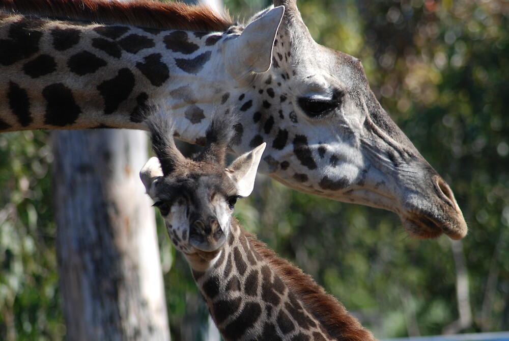 Mommy & Baby by debbiesue
