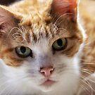Cat's eyes by LadyFi