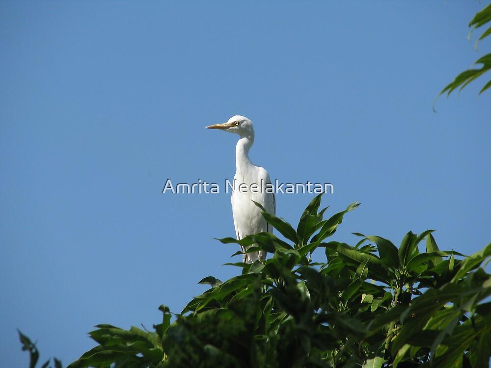 Egret by Amrita Neelakantan